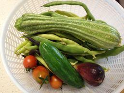 March harvest basket