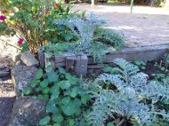 Globe artichokes appreciate a feed in autumn